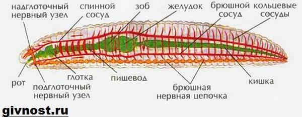 emberi körférgek élőhelye