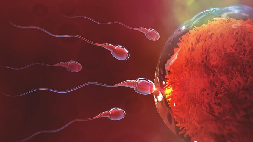 petesejtek a férgek ellen féreghajtó tulajdonságok