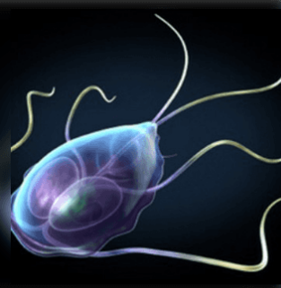 az emberi szem kezelésében élő paraziták lárva helminthiases