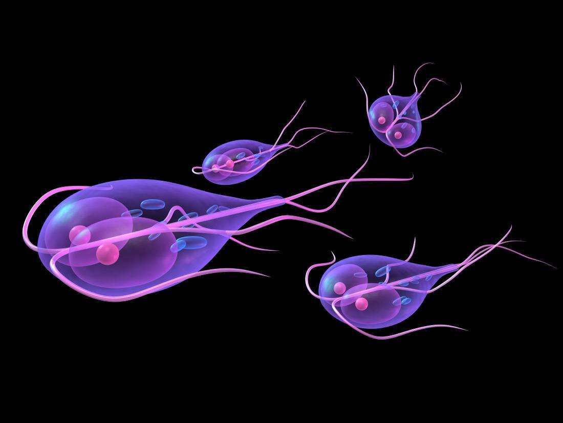 parasite symptoms giardia