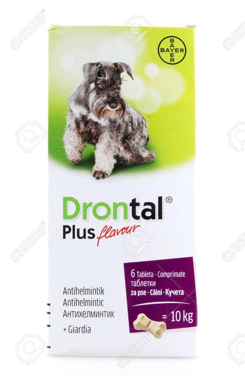 drontal plus giardia
