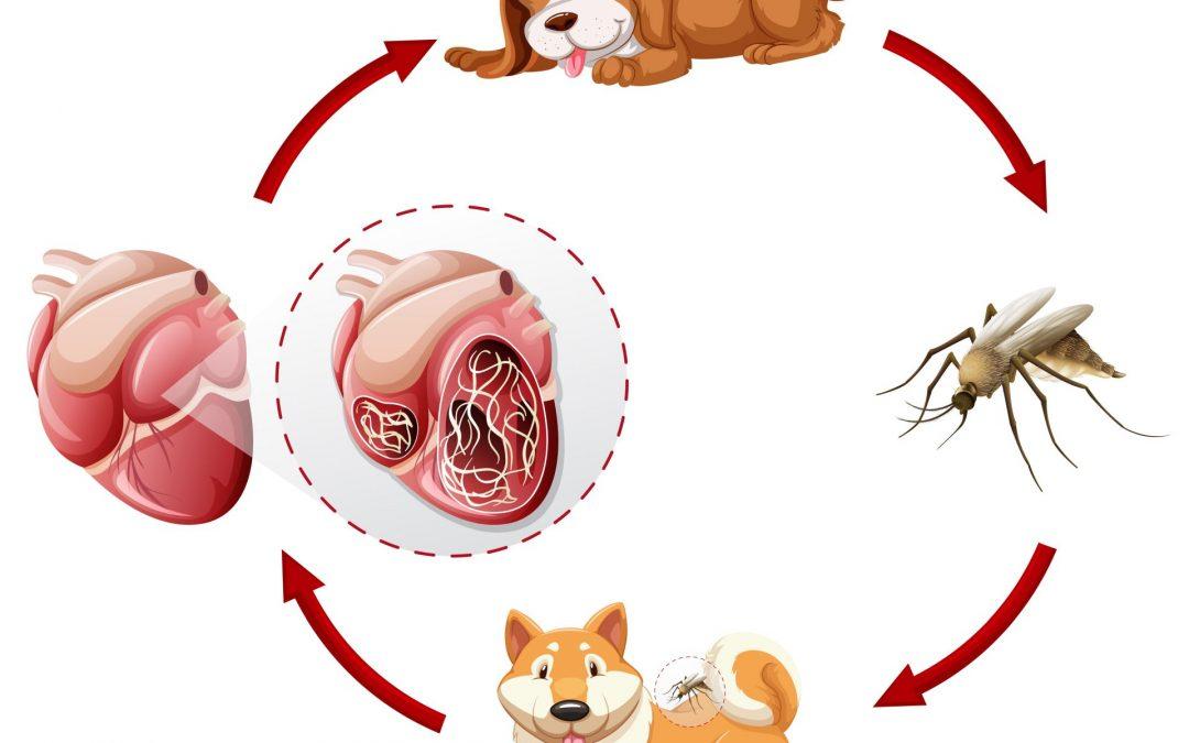 Milyen típusú férgek léteznek, Hogyan fertőz a férgesség?