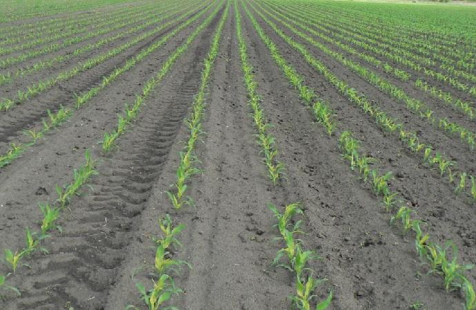 Hatékony védelem a talajlakó kártevők ellen - bacsbokodi-peca.hu