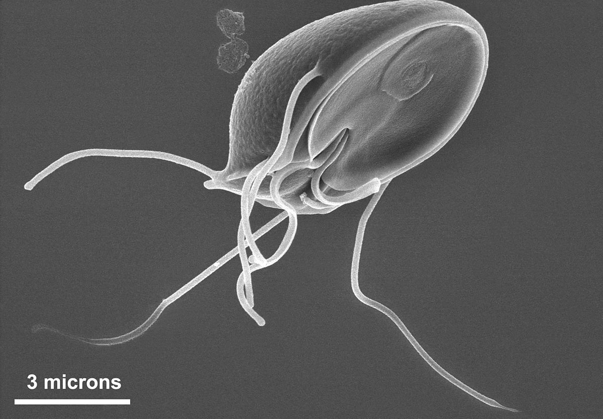 giardia genus and species
