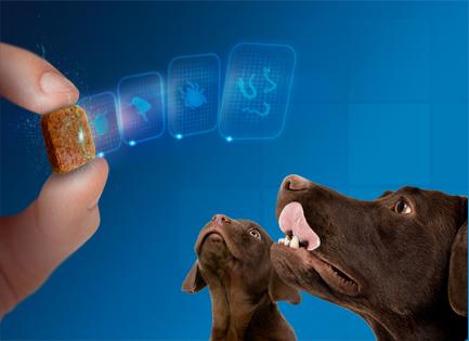 Nexgard Spectra – ízesített rágótabletta – kutyának