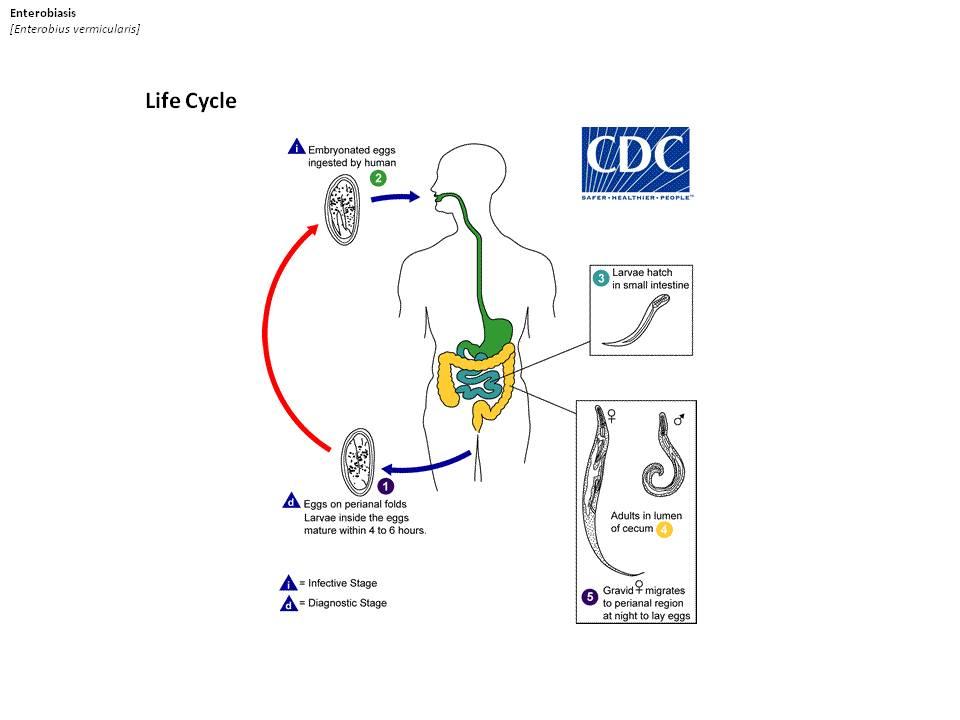 paraziták emberekben tünetek cdc