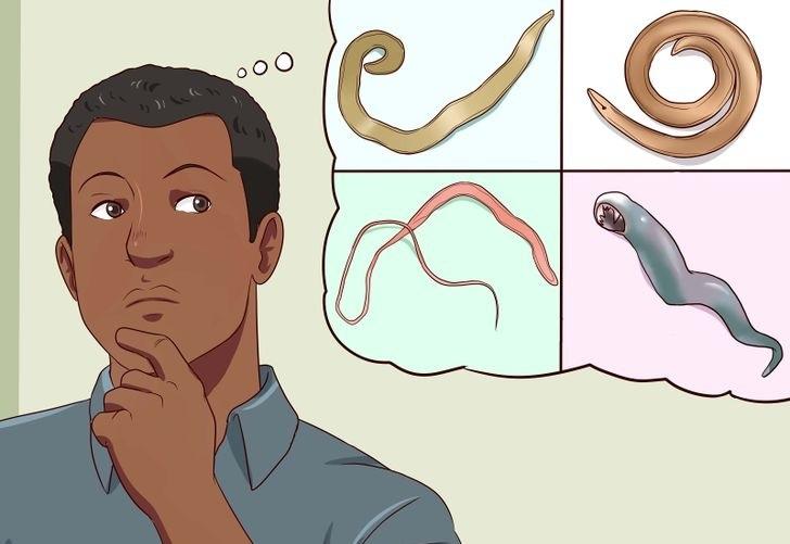 pinworm férgek gyermekek kezelésében milyen gyógyszereket inni a parazitákkal
