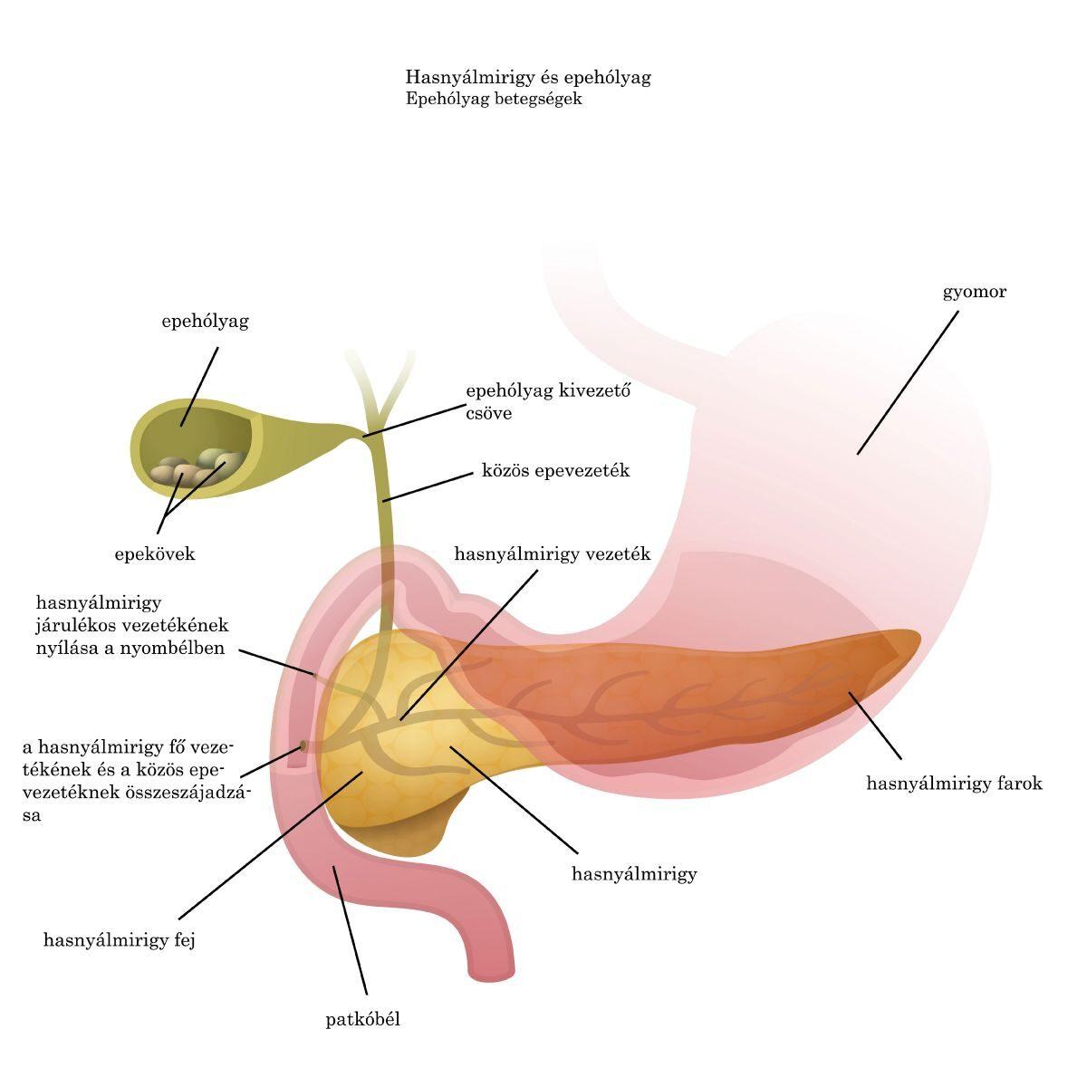 helminthiasis tesztek válaszokkal