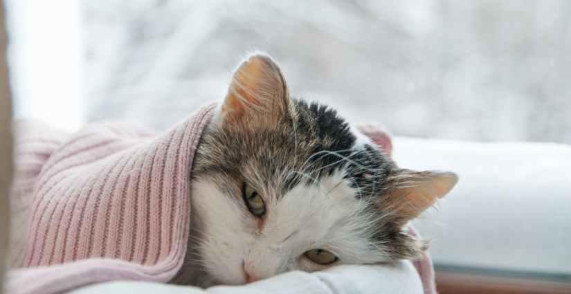 giardien bei katzen ansteckend