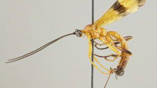 rovarokban élő paraziták a vírusokat kötelező parazitáknak nevezik