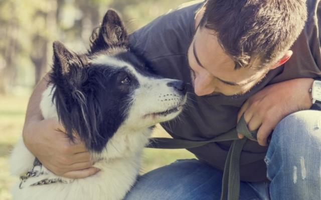 A kutyák szívférgessége
