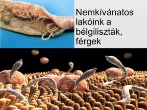 pszeudoparaziták székletben les nemathelminthesours
