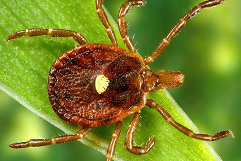 mit jelent a paraziták kezelése
