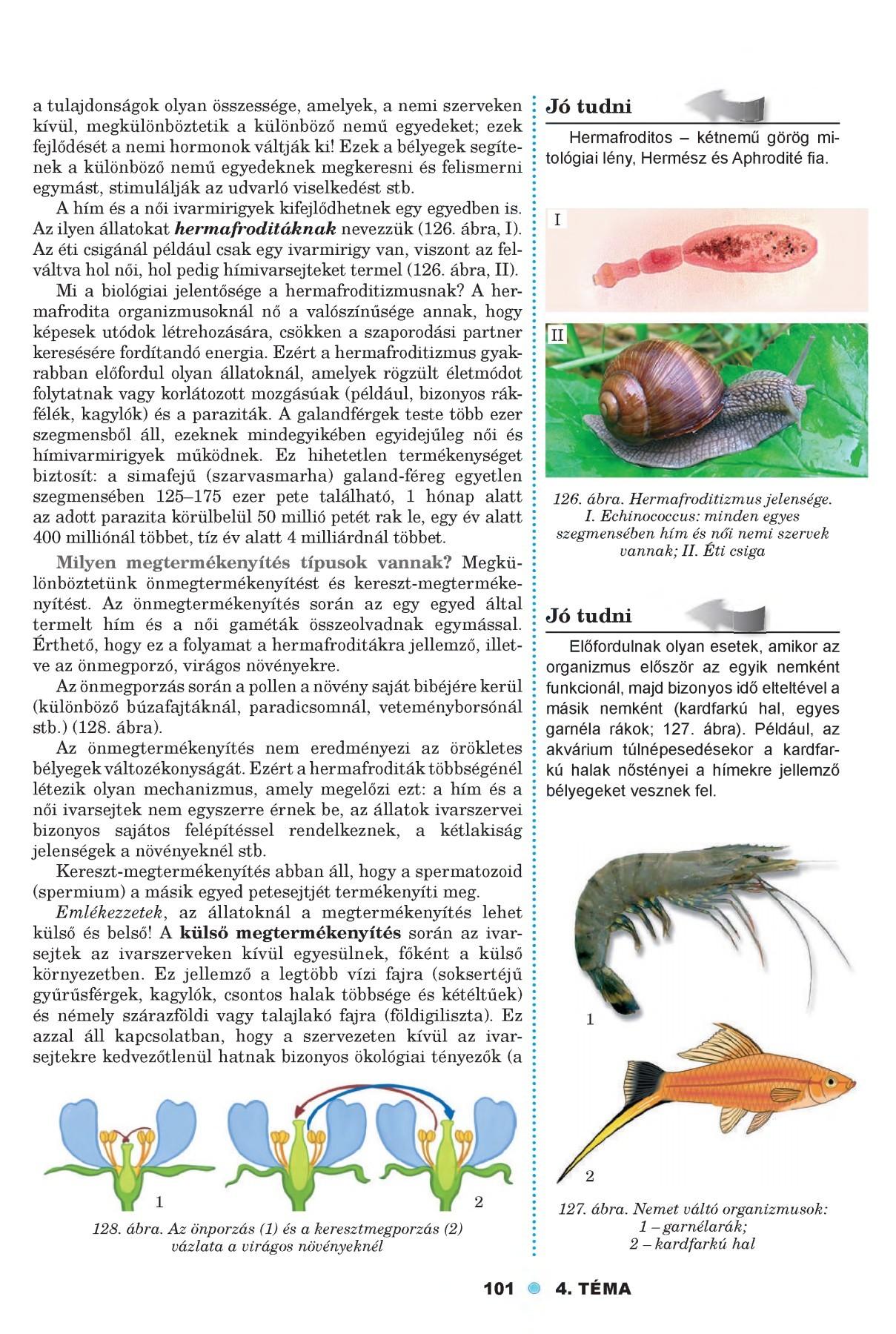 kagyló példák paraziták