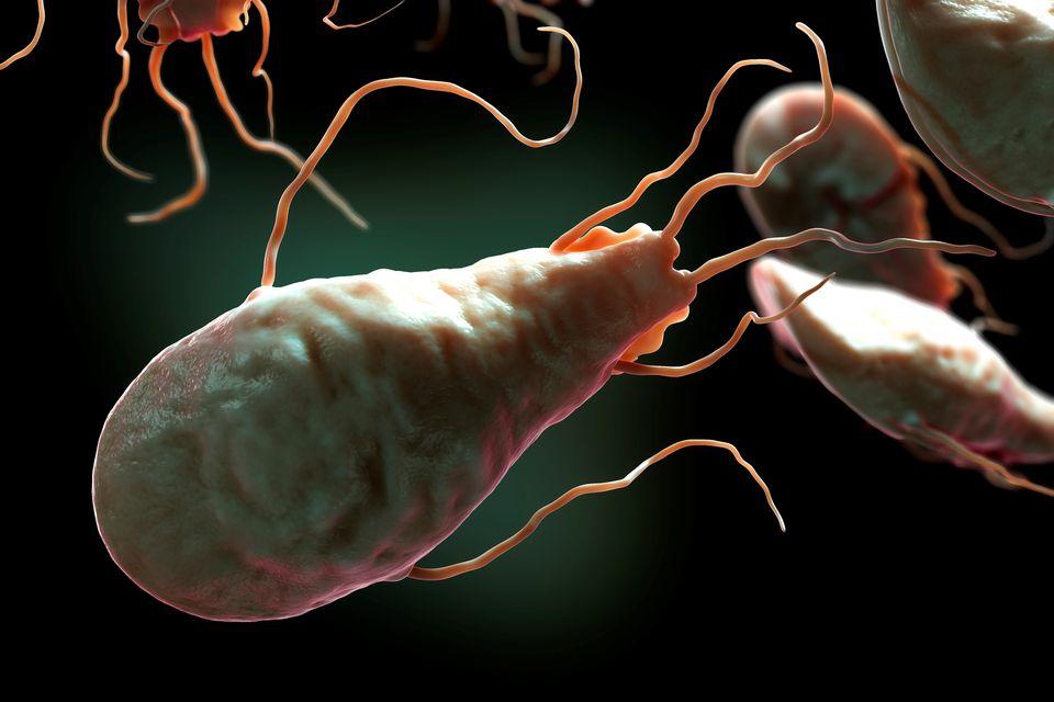 zoonózisos paraziták