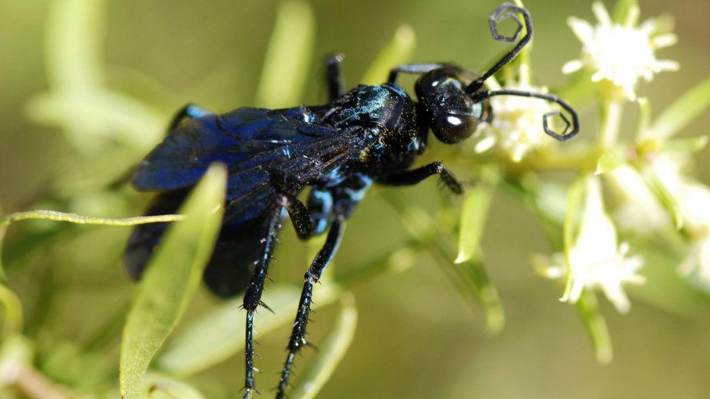 rovarok és pókok trippanosomatid parazitái