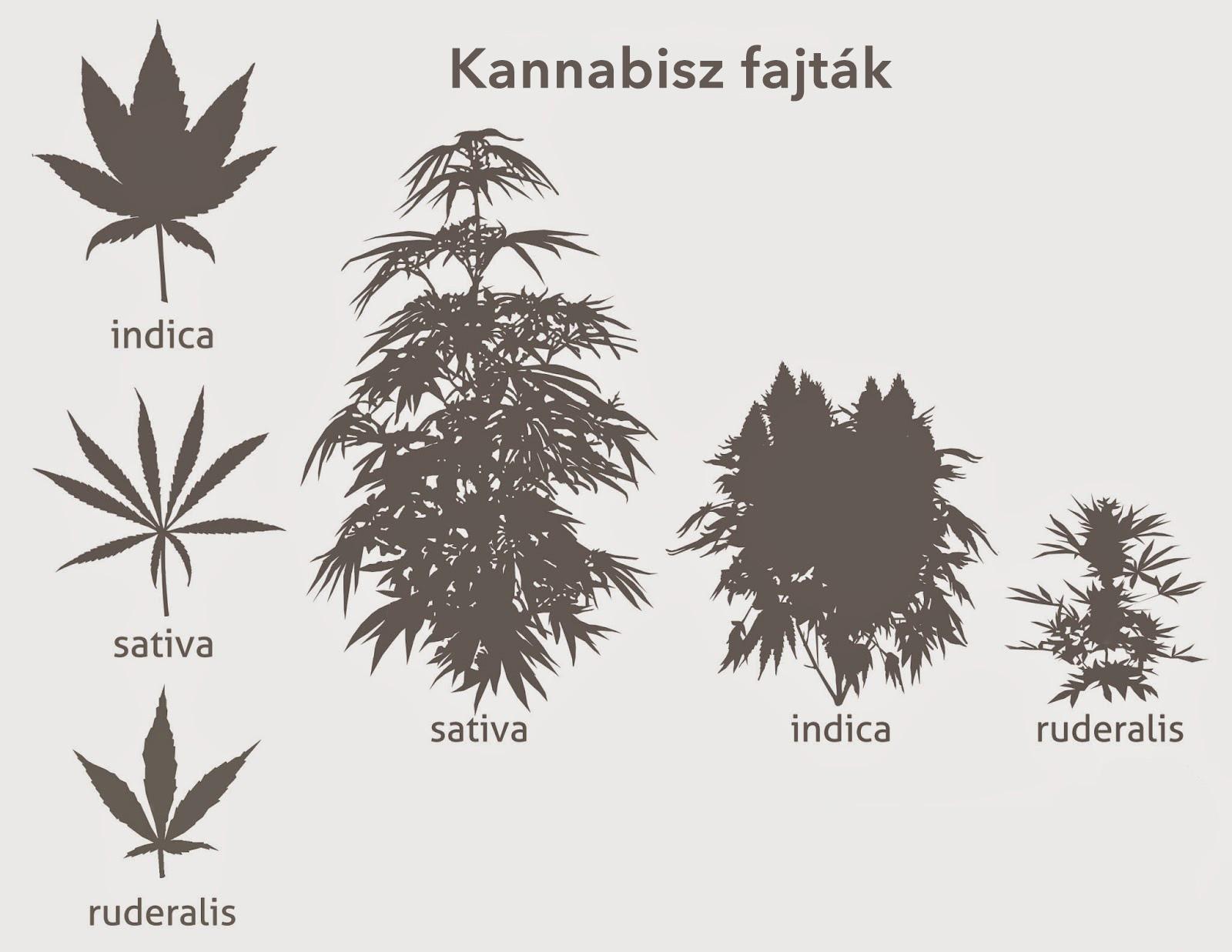 marihuána méregtelenítés hagyományos orvoslás pinworms