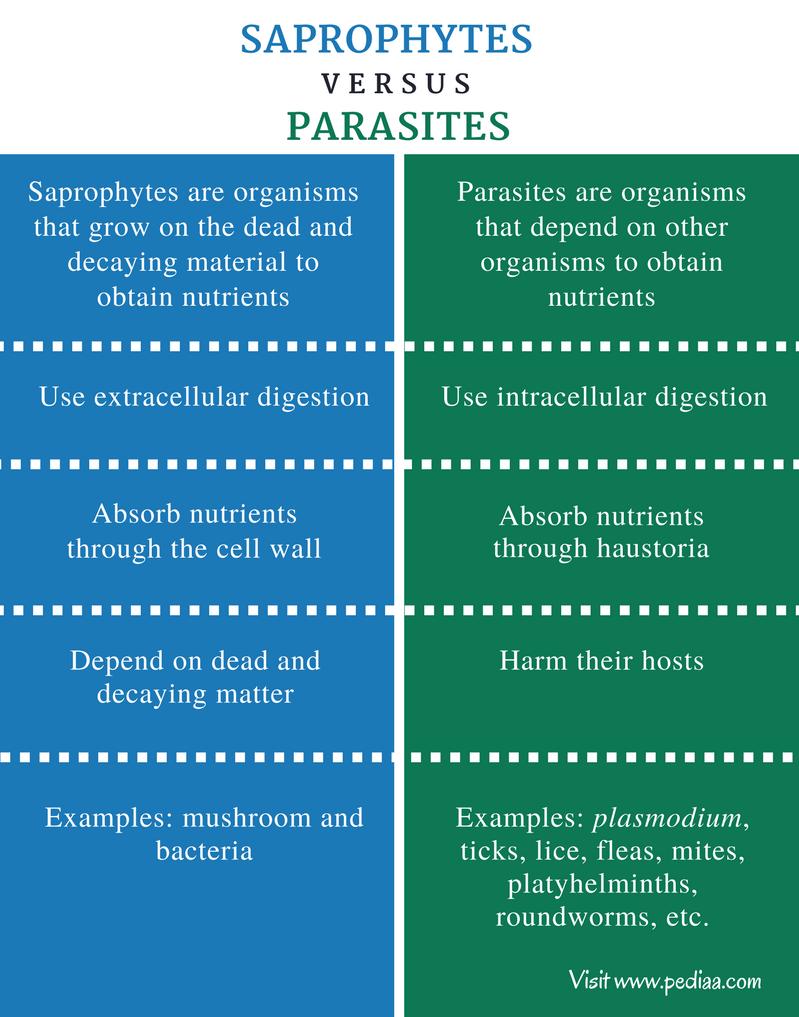 Helminták protozoa protozoa ,Giardiasis kezelő klinika