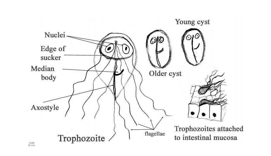 férgek gyógyszerei felnőttek számára pinworms a bőr alatt