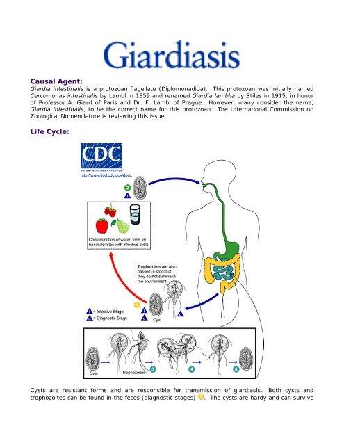 giardia cysts life cycle