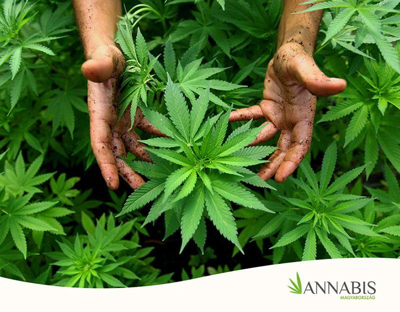kiegészíti a marihuána méregtelenítését