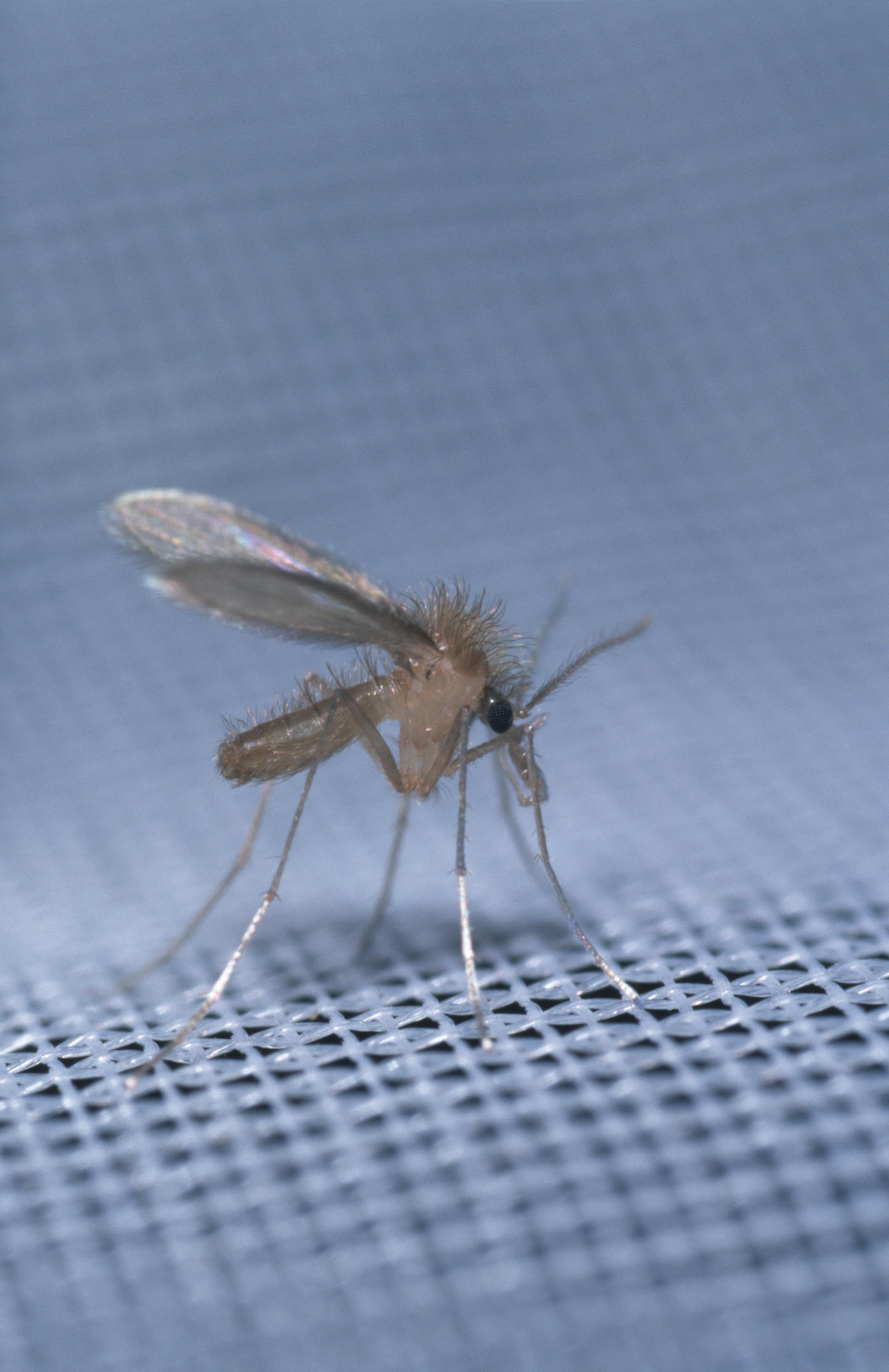 hányinger a paraziták kezelése közben