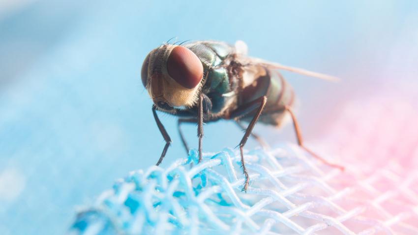 Todicamp parazita kezelés