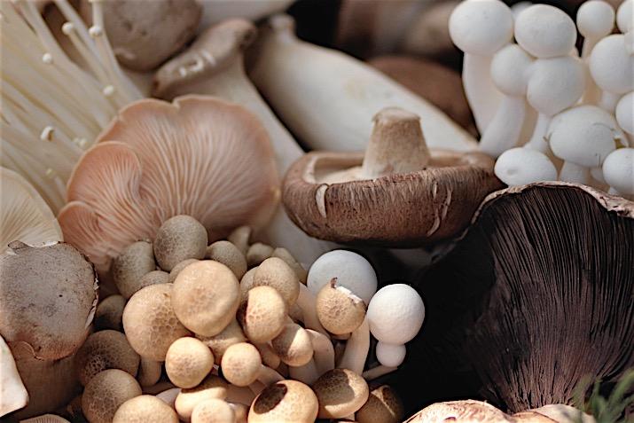 emberi bőrben burjánzó paraziták gombák és paraziták gyógyszere