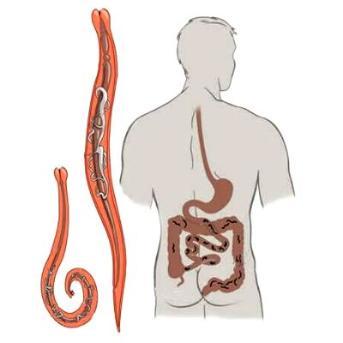 segít az enterobiosisban és a petesejtben