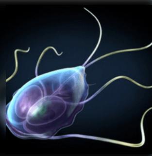 a testben élő paraziták