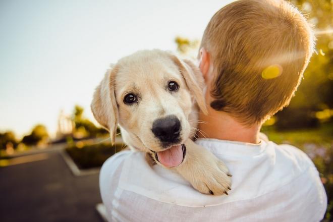 Figyelem! Már egy szúnyogcsípés is végzetes lehet a kutyáknak! | bacsbokodi-peca.hu