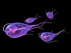 Human papilloma virus szemolcs, Társ az egészségben, orvos a betegségben!