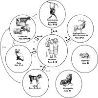 paraziták kezelése a gyomorban a kerek féreg kiválasztódik