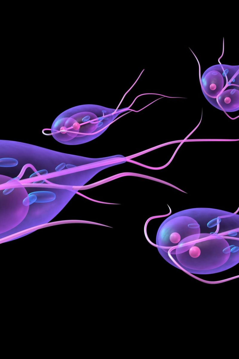 giardia in water supply