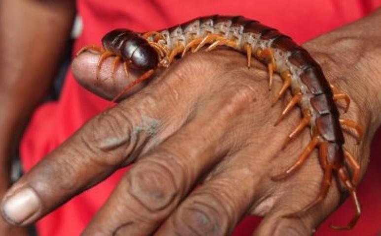 parazitákat okozó autoinfekció