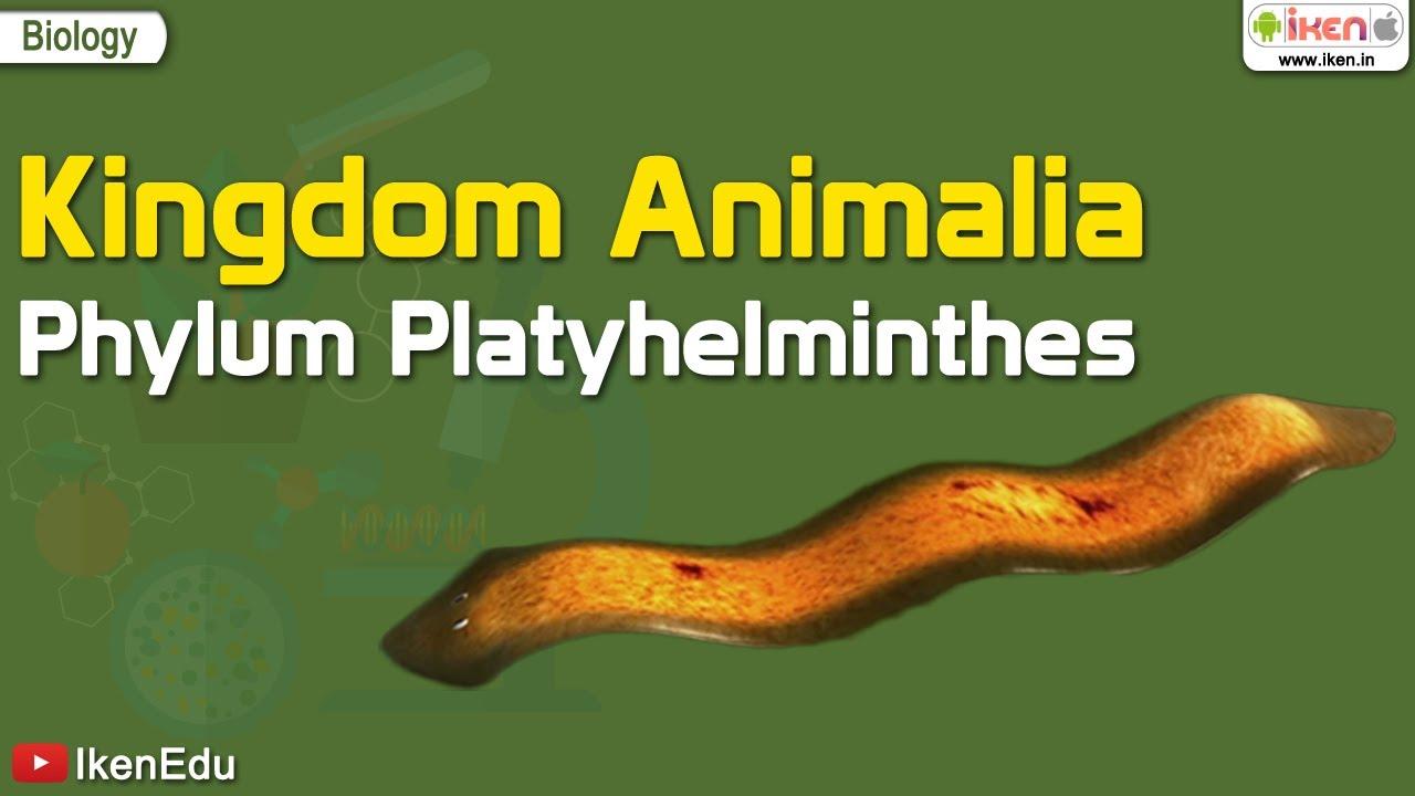 platyhelminthes 4. osztály parazita fejlődési ciklus
