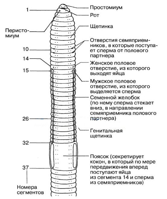 emberi körférgek élőhelye colin wilson az elme paraziták áttekintése
