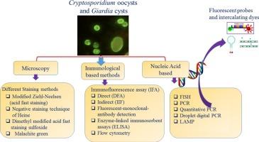 Giardia/Cryptosporidium antigén kimutatása székletből