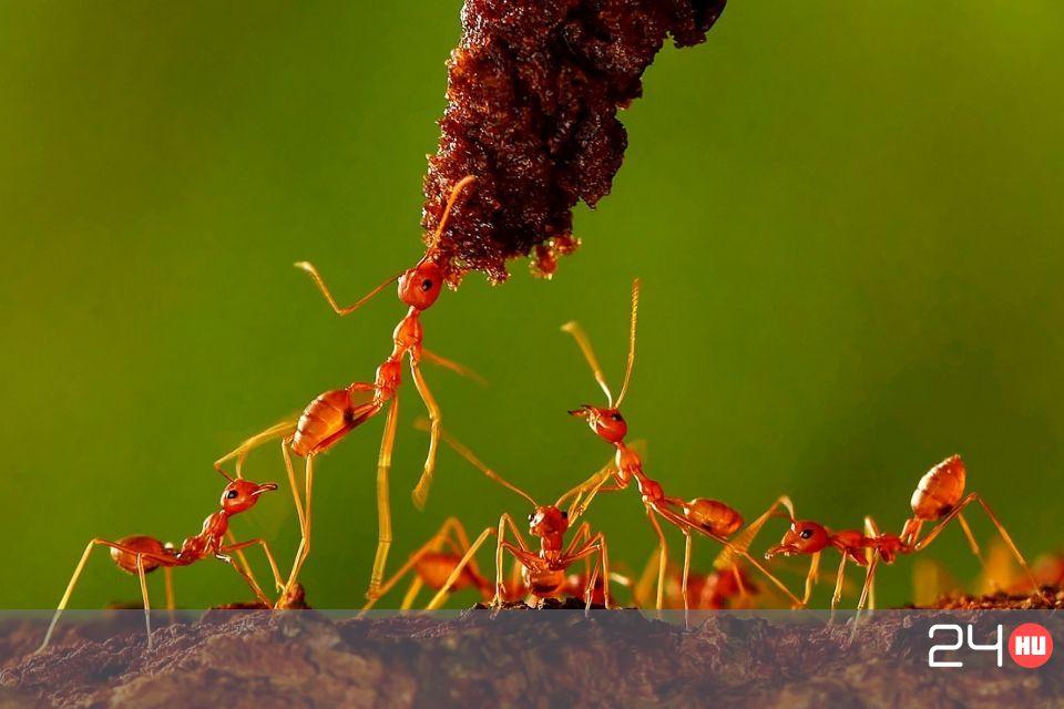 paraziták kezelése és megelőzése