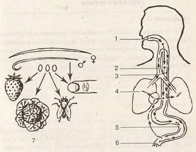 bika szalagféreg nem rendelkezik parazitakezelesi modszerek
