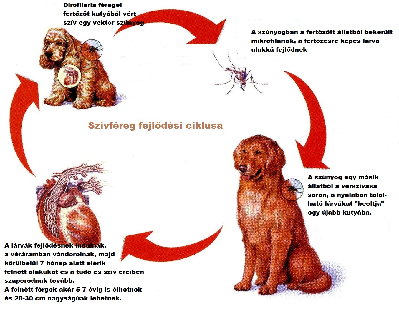 parazita gyógymód gyermekek számára