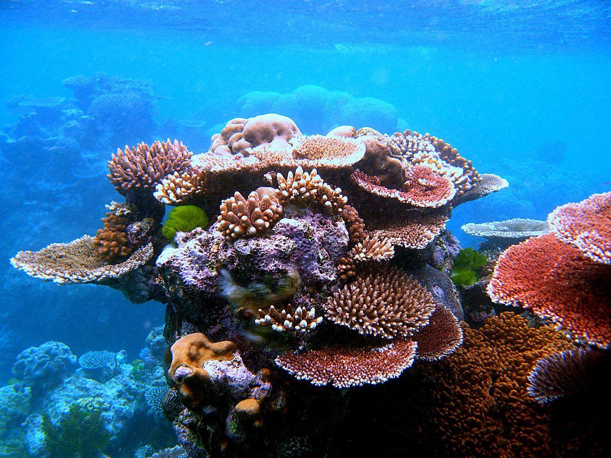 Nagy-korallzátony - kis halál - TUDOMÁNYPLÁZA - Környezet