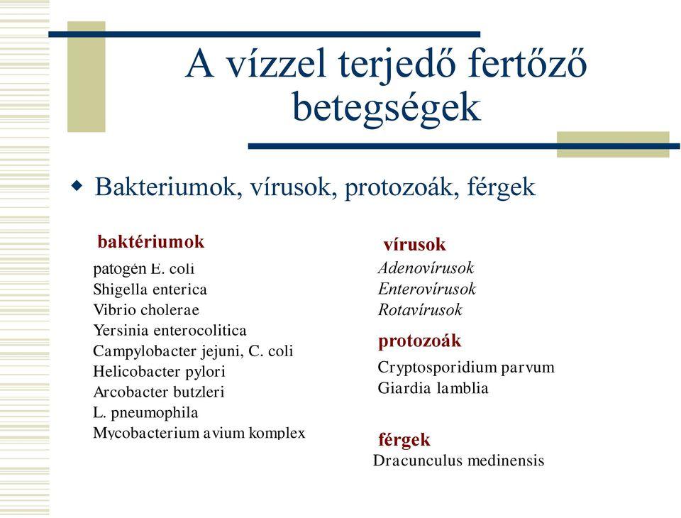 Helicobacter férgek
