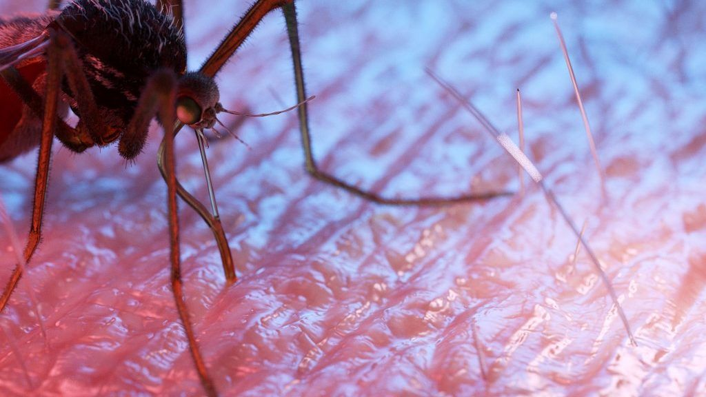 mit jelent egy parazita