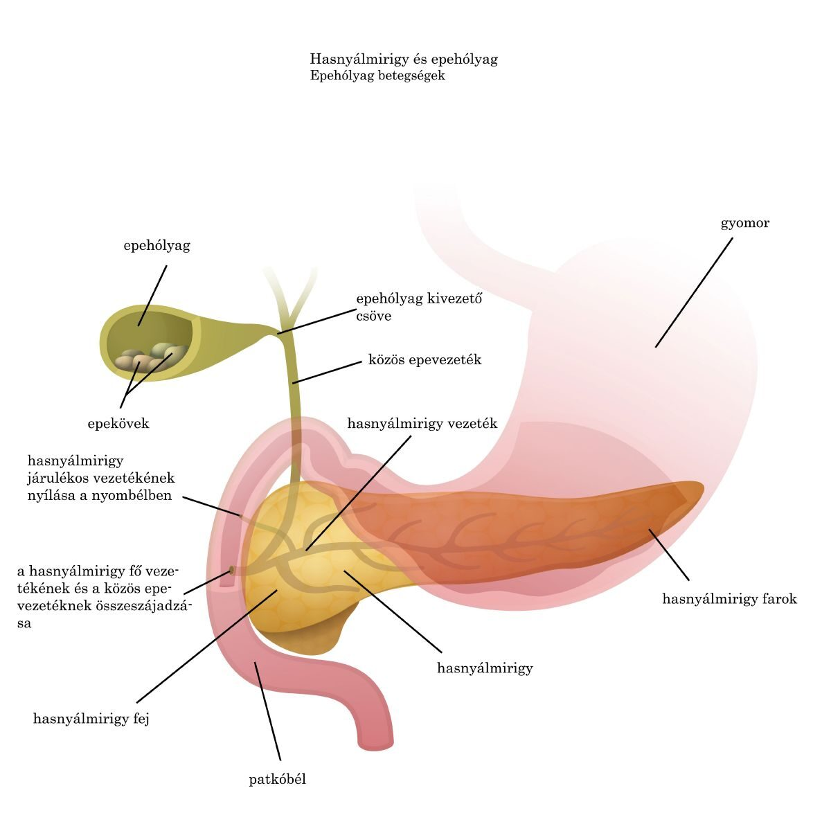 az aszcariasis klinikai tünetei