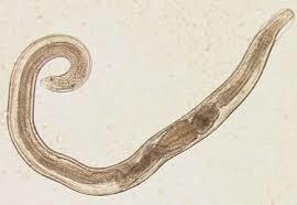 a mikrobiológiai mintavétel szabályai - Semmelweis Egyetem