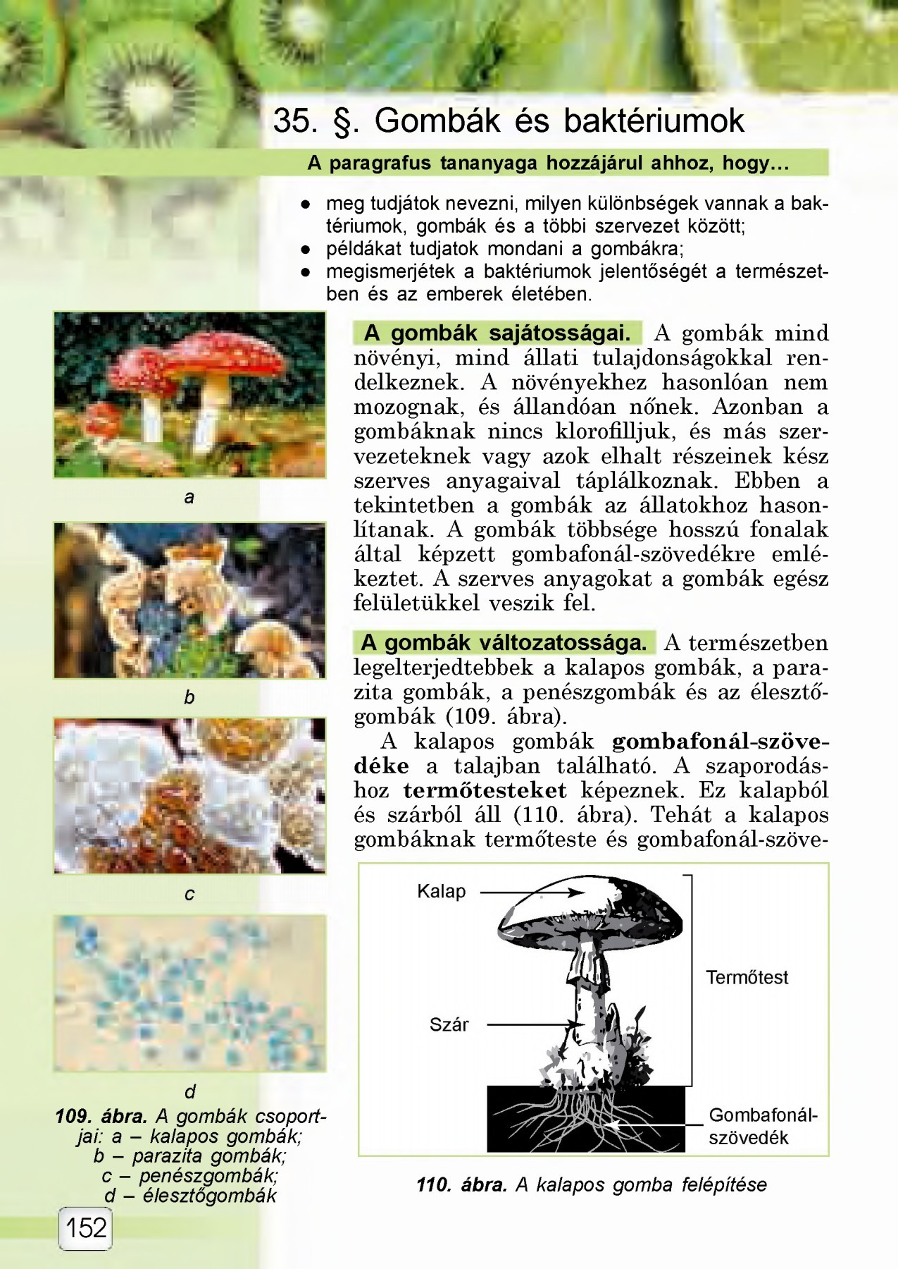 Parazita-puhatestűek: példák. Mik azok a kagyló paraziták?