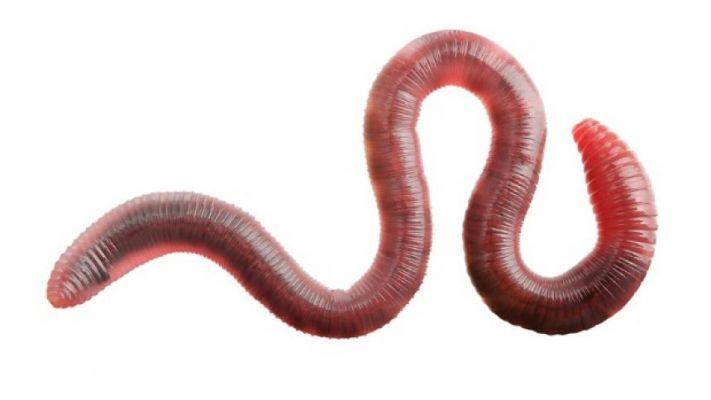 mi lehet férgek egy keszegben giardia diarrhea vomiting