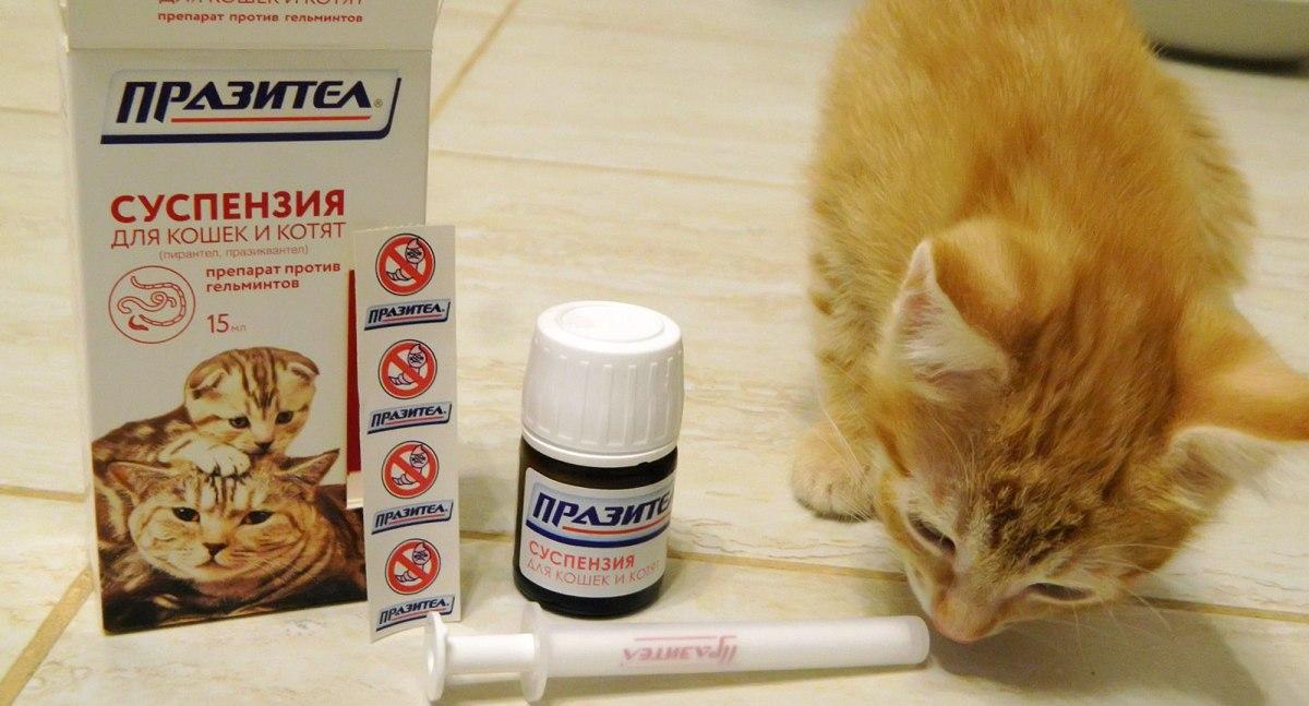 Univerzális gyógyszer az emberi paraziták számára