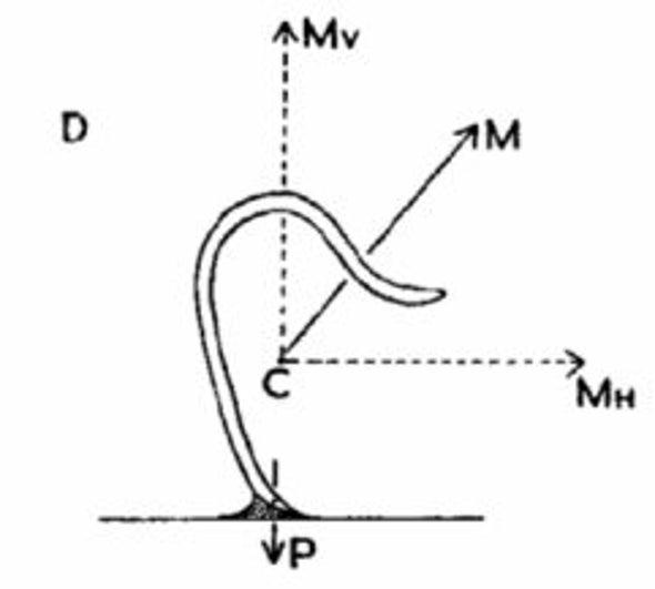 pinworm életciklus diagram